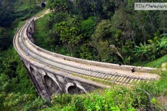 The Nine Arch Bridge in Ella is on the Demodara loop and spans 91 meters at a height of 24m. The beautiful nine arches make it a very picturesque spot especially as it is located in a dense jungle and agricultural setting.
