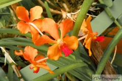 Lankan Beautiful Flowers