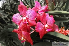 Lankan Blissfull Flowers