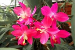 Lankan Flowers