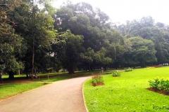 Sri Lanka Garden