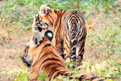 Tadoba Andhari Tiger Reserve is waiting for you.